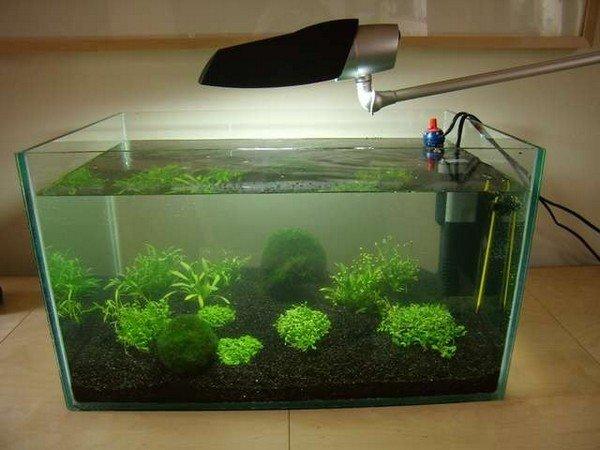 Как сделать своими руками аквариум для маленьких